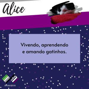 """fundo azul com estrelas brancas e roxas e o texto: """"Alice - vivendo, aprendendo e amando gatinhos"""""""